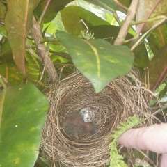 A couple of days later, we were thrilled to discover one baby bird!