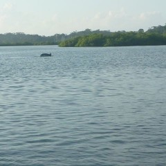 We love seeing dolphins!