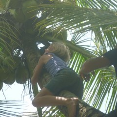 Then took down a few coconuts - Ellie truly is an island girl