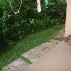 It's hard to see from this picture but we found a 8' long + snake on the patio, here's the snake running away