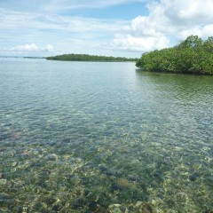 Snorkeling for Ellie's birthday at a local mangrove